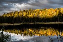 Autumn Sun (s.W.s.) Tags: saintmicheldessaints quebec canada nikon d3300 fall autumn sun nature lake reflection water forest trees wood clouds sky landscape lightroom