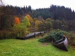 Loch Ard on a miserable October afternoon. October 2016. (Jen_wilsonphotography) Tags: landscape iphone outdoor trees loch autumn scotland trossachs aberfoyle lochard