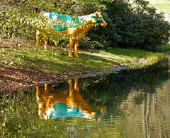 Oranje Muuu (Antropoturista) Tags: thenetherlands sandpoort landgoedduinkruidberg cow oranje reflection naranja divertido fun fotodivertenti