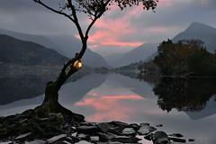 Lyn Padarn (PentlandPirate of the North) Tags: lynpadarn lake snowdonia northwales lonetree gwynedd llanberis lantern