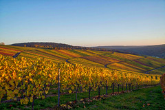 Colorful vineyards. (Sebastian | rose.fm) Tags: vineyard vineyards autumn colorful remstal sunny outdoor wine winemaking beutelsbach
