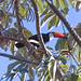 Toucan seen from below