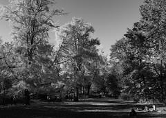CPAutumn I_bw (Joe Josephs: 2,861,655 views - thank you) Tags: centralpark joejosephs joejosephsphotography nyc newyorkcity travelphotography landscapephotography landscapes centralparknewyork centralparkfallautumnnewyorkcity blackandwhitephotography blackandwhite trees parks urbanparks fall fallfoliage fallcolors autumn autumninnewyork parkfallautumnfall