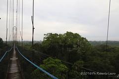 Over the top of the forest (Roberto Lauro) Tags: viaggi travel foresta forest albero passerella tree napo rionapo amazonas amazzonia ecuador canon paesaggi panorama natura nature
