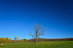 Blue Sky and a Lonely Tree (DTD_0691) (masinka) Tags: arcade newyork unitedstates ny western blue sky green grass lonely tree lone alone bare nature landscape roadside countryside fall autumn etbtsy open space symbolic