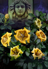 Goddess of The Gold (John Jardin) Tags: flowers sculpture plant green leaves yellow wall garden gold golden goddess dramatic vine exotic blooms solandra