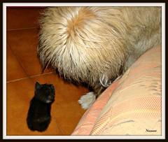 Il gigante e la bambina (nessuno64) Tags: pet cane lea gatto gandi ribbet sonydsch50 cuddiolo