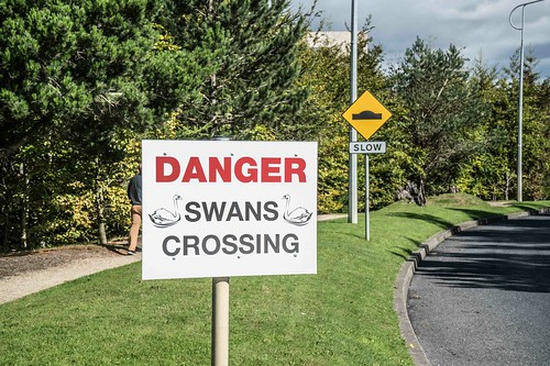 DANGER SWANS CROSSING [CITYWEST] REF-1085530