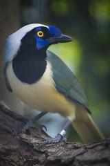 Bird Avifauna (siebe ) Tags: holland bird netherlands dutch animal zoo nederland dier vogel avifauna dierentuin alphenaandenrijn 2015 vogelpark