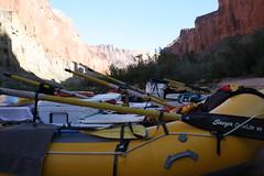 Grand Canyon 2015 606