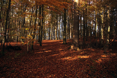"""Herbstwaldspaziergang (07) • <a style=""""font-size:0.8em;"""" href=""""http://www.flickr.com/photos/69570948@N04/22457877377/"""" target=""""_blank"""">View on Flickr</a>"""
