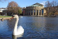 Swan of Stuttgart, Germany (Rodrigo P.C.) Tags: travel germany europa europe stuttgart viagem alemanha estugarda