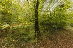 otoño (Laura Cué) Tags: hojas arbol bosque otoño cantabria ucieda lauracue