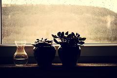 52/48 interior life ([m.keller]) Tags: windowsill interiordesign week48 week48theme 52w