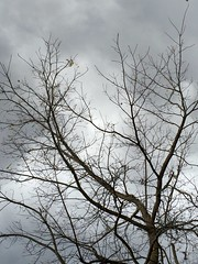 Storm sky in late October 2015 (Parrishthethought) Tags: autumn trees sky fall ominous