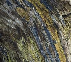 Old log (Sorin Popovich) Tags: park wood log mississauga streetsville creditriver streetsvillememorialpark