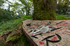 Cup of tea? (pjparra) Tags: voyage travel autumn trees forest automne scotland wideangle arbres trossachs forêt ecosse queenelizabethforestpark pentaxart