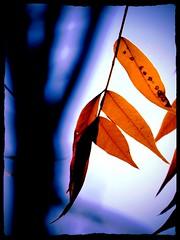 Anglų lietuvių žodynas. Žodis Zen reiškia n rel. dzenbudizmas (t. p. Zen Buddhism) lietuviškai.
