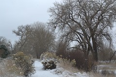 Falling Snow (KsCattails) Tags: winter snow tree landscape snowflakes nikon colorado outdoor dusk path gray ftcollins d3100 kscattails
