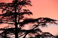Sunset @ Puigcerd II #Puigcerd #catalunya #lacerdanya #cerdanya #canon #70D (ferrancontreras) Tags: canon catalunya cerdanya lacerdanya puigcerd 70d