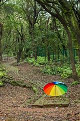 Matheran-5438 (Satish Chelluri) Tags: satishchelluri satishchelluriphotography matheran maharastra umbrella mansoon
