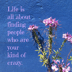 Your kind of Crazy... (teresue) Tags: motto quote cleome 2010