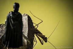 ELLA-Lamantis (Juanma Dominguez) Tags: el seor de los anillos hobbit mantis mantidae