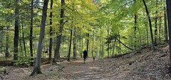 Pink Lake Trail (Roger Daigle) Tags: pink lake trails gatineau autumn jogger nikon
