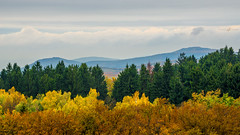 Stripes of autumn (forceberg) Tags: mountain fog foggy autumn color tree forest above cloud outdoor mountainside landscape hill nikon dslr fx d600 ultra angle hegy view viewpoint spring sun ligh forceberg 2015 sky cloudy sunset field foothill ridge peak grassland mtra galya galyatet