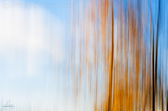 Autumn Day (Quincey Deters) Tags: 2016 abstract allrightsreserved art autumn black blue blurredmotion brown canada colourimage colourful fall fallcolours flora forest horizontal icm intentionalcameramovement lines nature october orange outdoor tree verticallines white yellow quinceydeters
