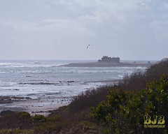 054 LR (bradleybennett) Tags: water river ocean stream creek ano nuevo beach shore shoreline line coast tide