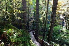 (CanMan90) Tags: fence friday weekend forest wooden rail autumn outdoors october hiking trail goldstream victoria britishcolumbia cans2s canon rebelt3i vancouverisland canada