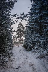 В Сыктывкаре наконец-то выпал снег!