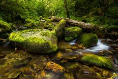 2016_016 (kgorka) Tags: gorkabarreras canon eos7d kata manfrotto sigma1020mmf35exdchsm sigma rio river infierno piloa infiesto asturias mt055cxpro3 verde green agua water quedada paisaje lanscape