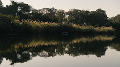 South Africa 2016 (mcmessner) Tags: adventure africa bj boat grass reflection river sunrise sunriseboatride suspended tongabezi tongabezilodge water zambeziriver zambia livingstone