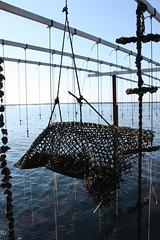 * (Anduze traveller) Tags: france languedocroussillon hrault etangdethau bouzigues oysterfarming musselfarming