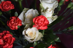 DSC_3212 (PeaTJay) Tags: nikond750 reading lowerearley berkshire macro micro closeups gardens indoors nature flora fauna plants flowers rose roses rosebuds carnations