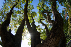 Tranks and the Sun (nak.viognier) Tags: tranks sun ryokuchipark osaka 緑地公園 olympusepl3 lumixgfisheye8mmf35