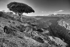 Cave hut over Firmhin (indomitablemachine) Tags: dixam rokeb canyon dragonblood firmhin hut plateau socotra yemen hadhramautgovernorate ye