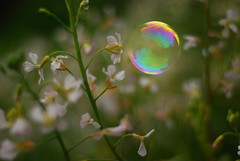 Radish and a bubble (imajane) Tags: imajane 2016 00dsc8271radishandabubblejpg radish bubble flowers garden home composite cheating photoshop champagnebottlebubbles depthoffield champagne bottle bubbles