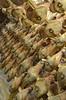 Cured Ham [Sgonico - 29 October 2016] (Doc. Ing.) Tags: 2016 trieste veneziagiulia friuliveneziagiulia fvg nordest italy carso sgonico prosecco food meat curedmeatham ts curedmeat coldcut ham