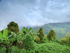 Munduk , Bali . (Franc Le Blanc .) Tags: panasonic lumix indonesia bali munduk pupuan mountains fog