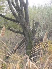 DSCN7420 (Gianluigi Roda / Photographer) Tags: autumn autumncolors tree deciduoustrees
