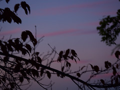 Sunset 20161117 (caligula1995) Tags: 2016 clouds plumtree sunset