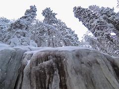 National Park Koli - Finland (Sami Niemelinen (instagram: santtujns)) Tags: koli suomi finland kansallispuisto national park mets forest talvi winter lumi snow puu tree patikka retkeily hiking trekking luonto nature maisema landscape pohjois karjala north carelia lieksa j ice frozen