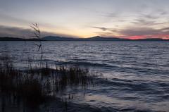 Sunset (Massimo_Discepoli) Tags: sunset lake water waves colors umbria italy mood trasimeno