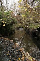 IMG_8923 (Geoff_B) Tags: badockswood bristol walkinthewoods autumn november unprocessed unedited