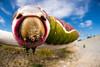 Puss Moth Caterpillar (johnhallmen) Tags: lepidoptera caterpillar macro moth canon760d canon2428stm cctv canon270ex