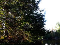 This Tree (Sally G Drew) Tags: calabogieontario naturesbeauty waterreflections