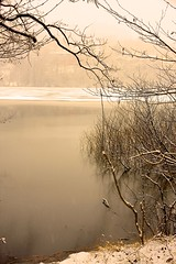 Winter Lake (claudioolé) Tags: peace nature switzerland winter dry branches lago quiete ghiaccio inverno freddo alberi secco neve natura tree ice icy